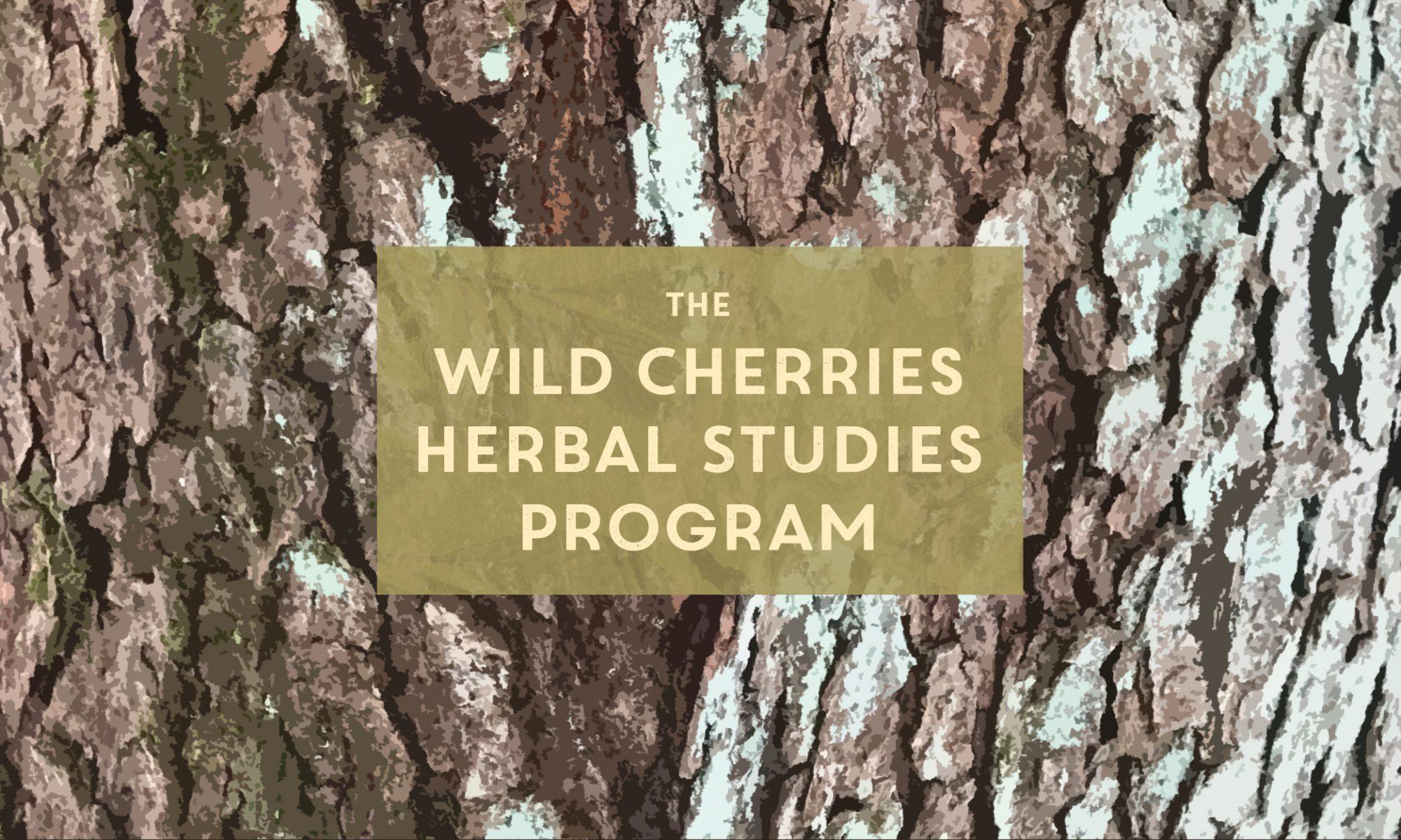 Text: Wild Cherries Herbal Studies Program, set on a background of cherry bark