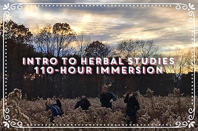 Class Title: Intro to Herbal Studies 110-Hour Immersion (superimposed over happy students leaping in an autumnal field of dried goldenrod, lightly silhouetted against a bright mackerel sky near dusk.)