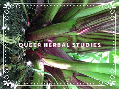 Class Title: Queer Herbal Studies (superimposed over the technicolor green and fuchsia stems of a rhubarb.)
