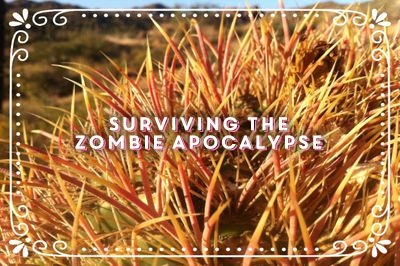 Class Title: Surviving the Zombie Apocalypse (superimposed over an image of the bright sunset-colored yellow and magenta spines of a barrel cactus.)